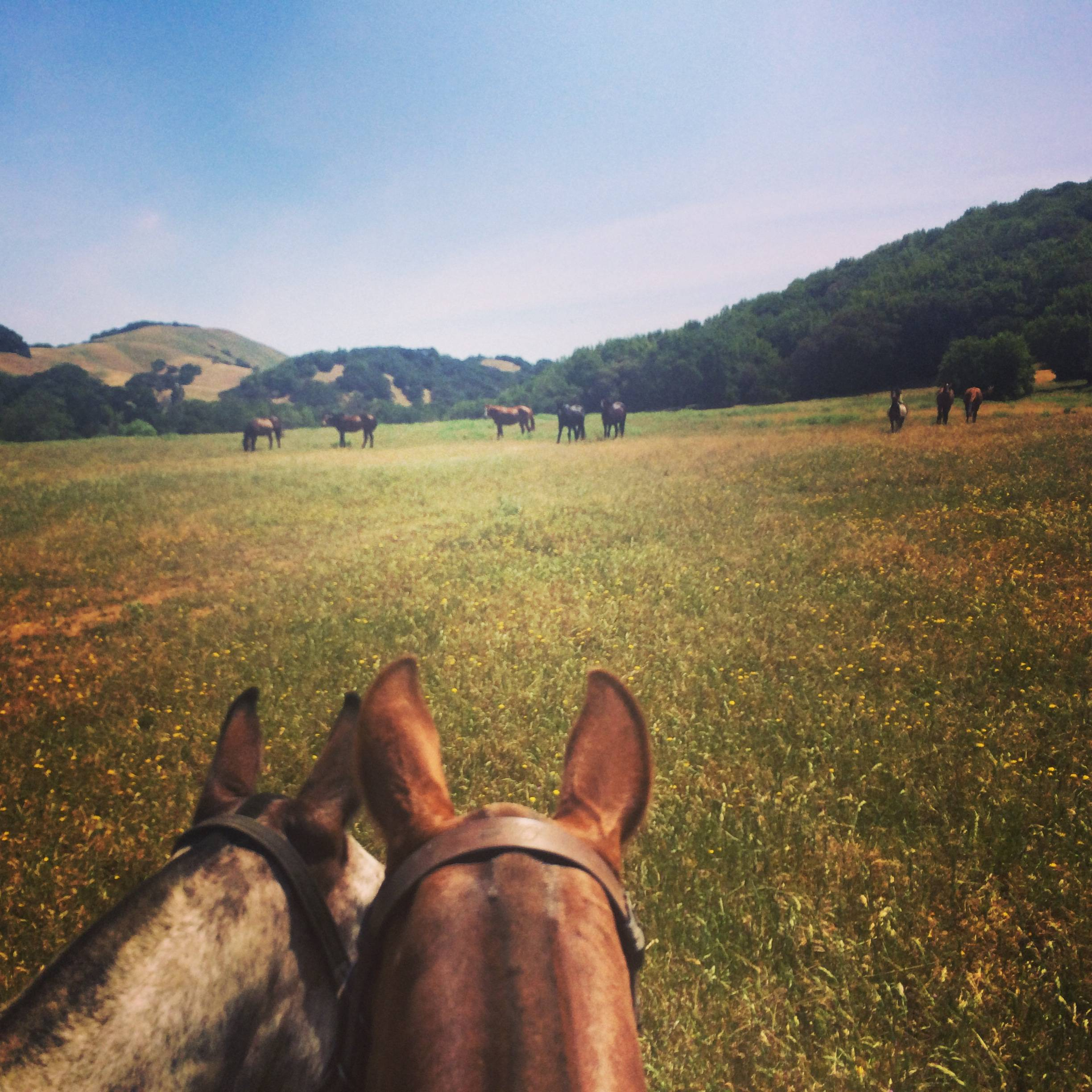 A view on horseback.