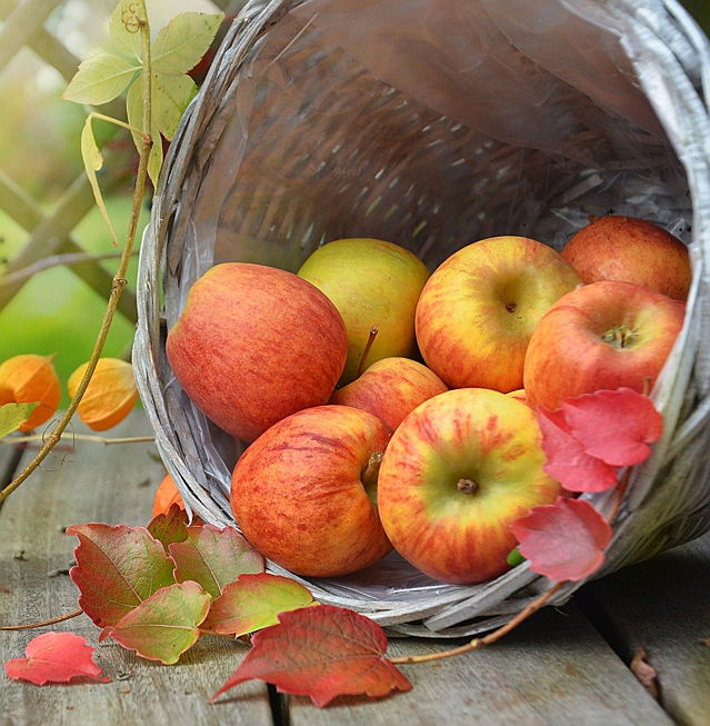 Merano - Apple harvest is not yet completed in South Tyrol when the Merano Grape Festival takes place.
