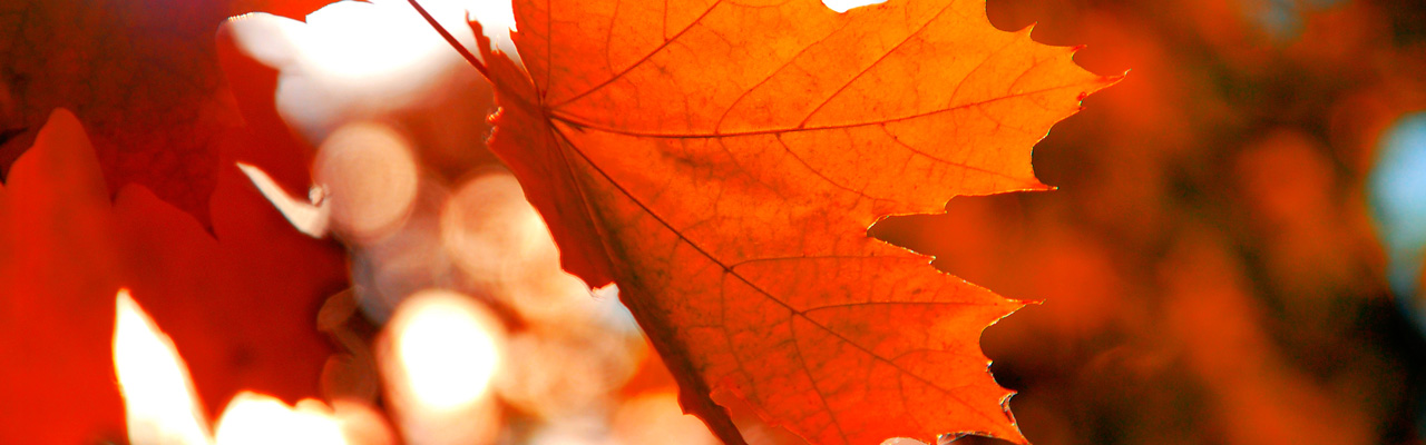 Naples - Italy - Autumn_Homepage_Keyvisual_1280x400px_Motive_1.jpg