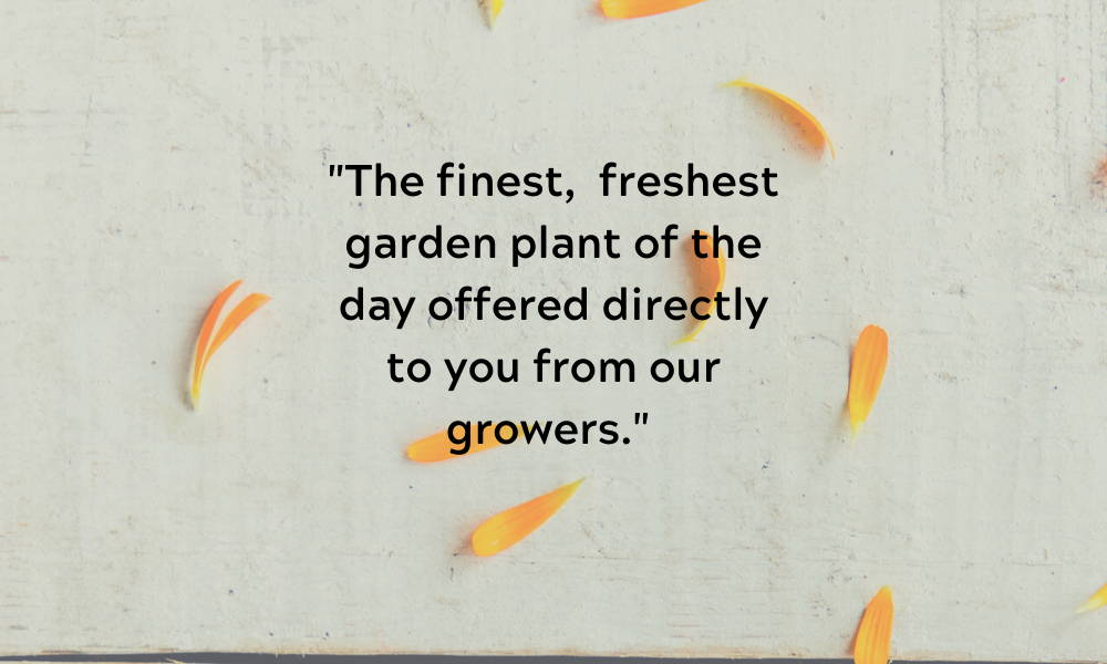 The finest, freshest garden plant of the day offered directly to you from our growers.