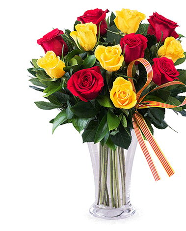 hf Red & Yellow Roses