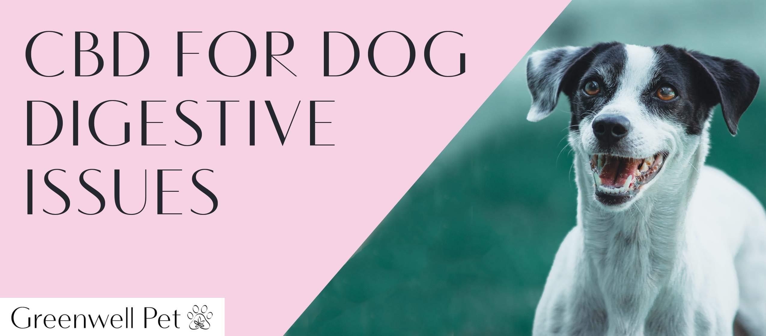 cbd for dog digestion