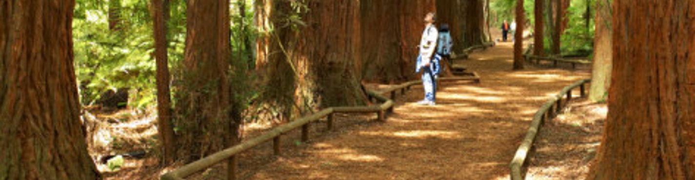 6. Экскурсия в парк Красный Лес. Роторуа.