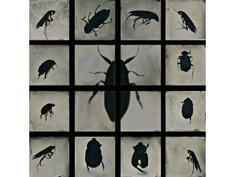 """S. Gayle Stevens. """"Insectare-Bugged"""""""