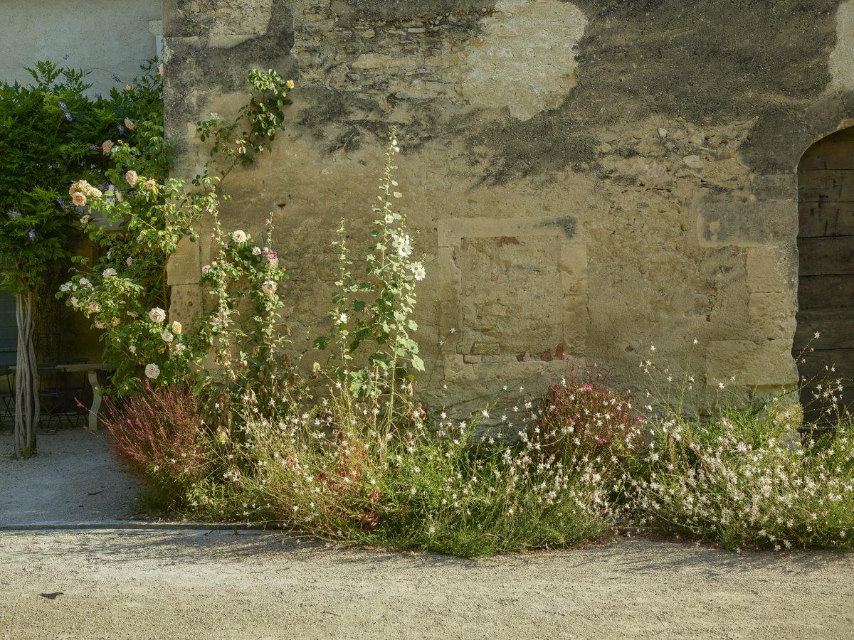 Erik Dhont — Provence