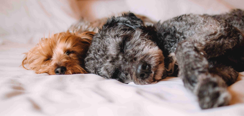 Sleep Zone- Blog-All you need to knwo about pet friendly fabrics