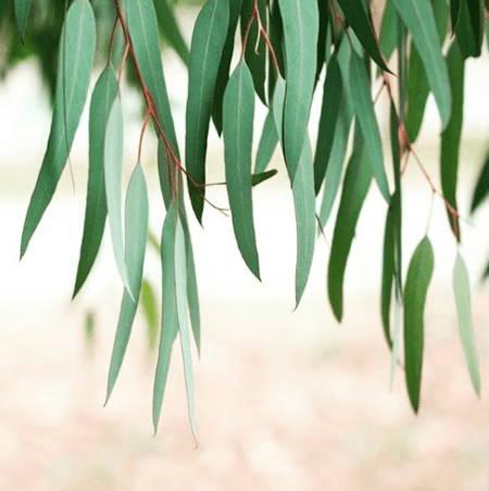 best cooling pajamas eucalyptus