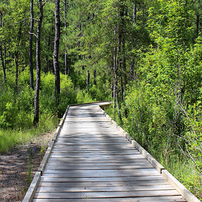 Big Thicket National Preserve, South East Texas Camping area, Camping Area, Forest Camping, Big Thicket, hiking, horseback riding, biking, canoeing