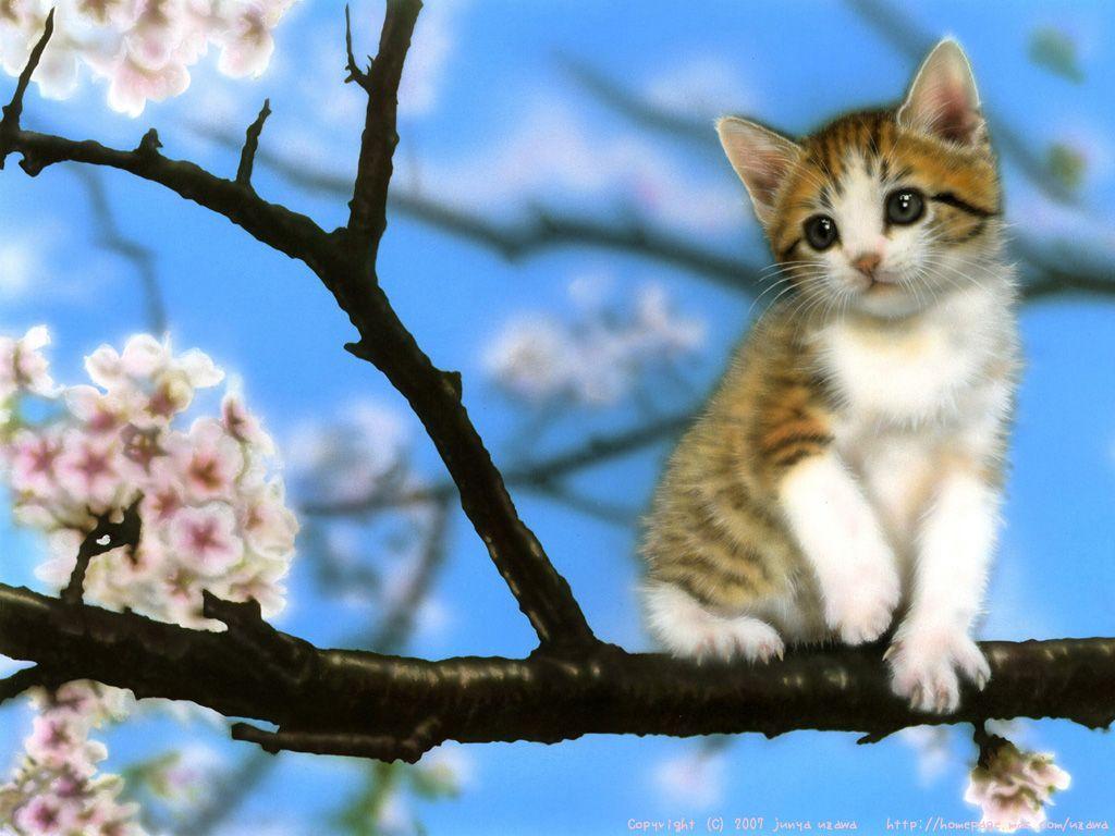 Sakuraリアルイラスト動物子猫sakura桜さくらサクラ