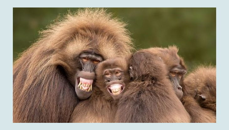 naturzoo rheine affen lachen