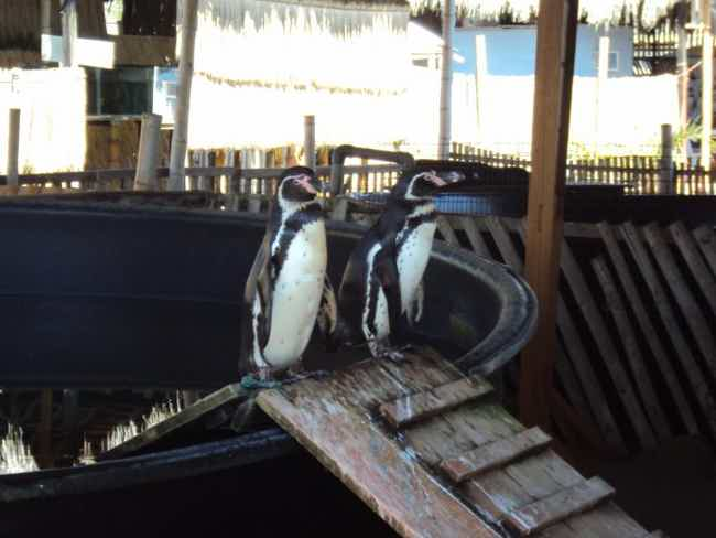 Aquarium Valdivia-Valdivia