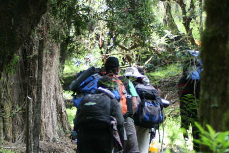 Hike Through Indigenous Forest to Zania Falls