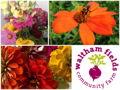 Flower Share from Waltham Fields Community Farm