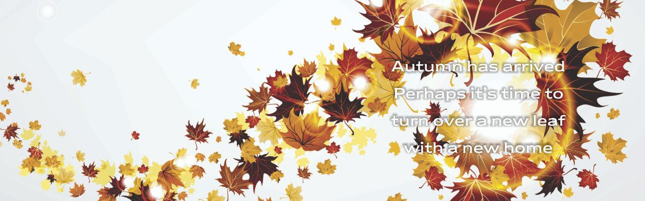 81 - Autumn_SD 1280 x 400.jpg