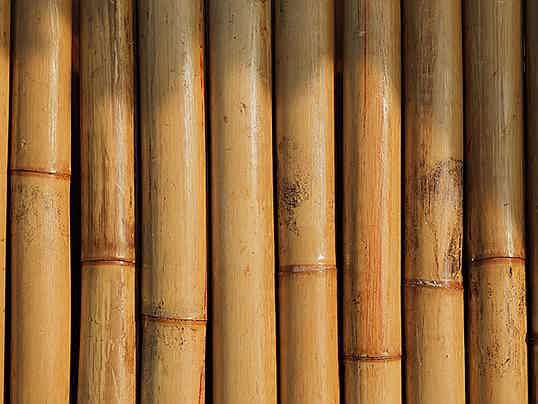 Brussels - Bamboo instead of steel and concrete. Discover the unexploited possibilities of bamboo in house building and sustainable living.