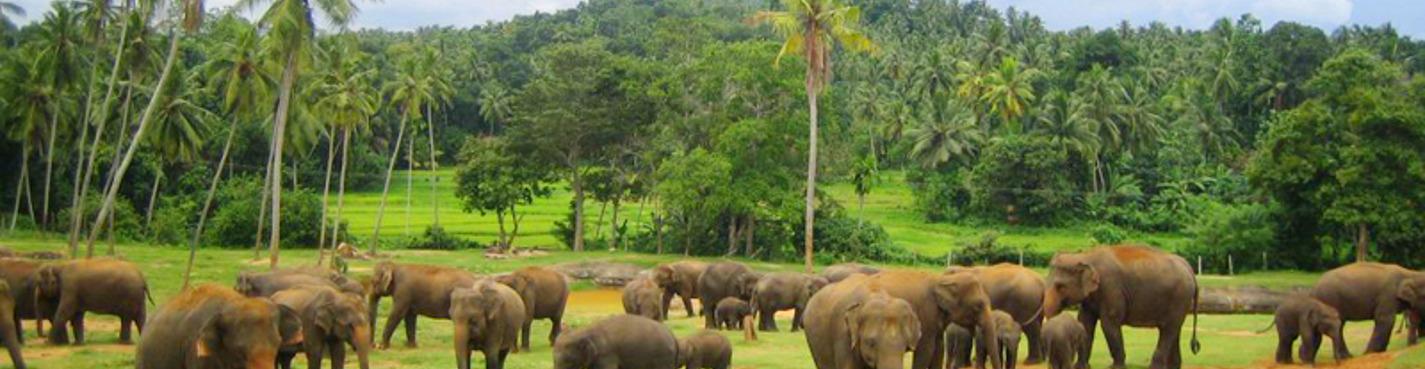 Джип-сафари по национальному парку Удавалаве