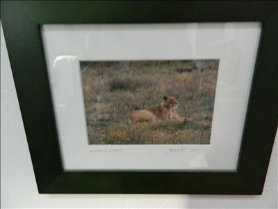 Signed Lion photo