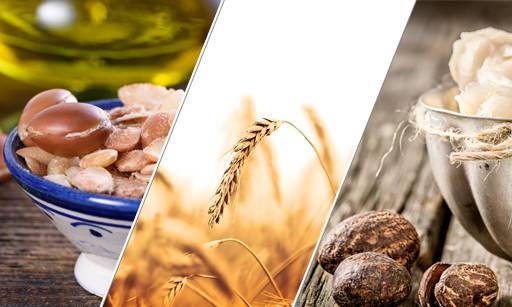 Stimu-TEX® AS A plant complex obtained from barley grain wax