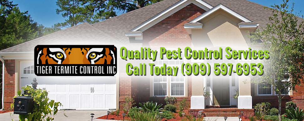Tiger Termite Control