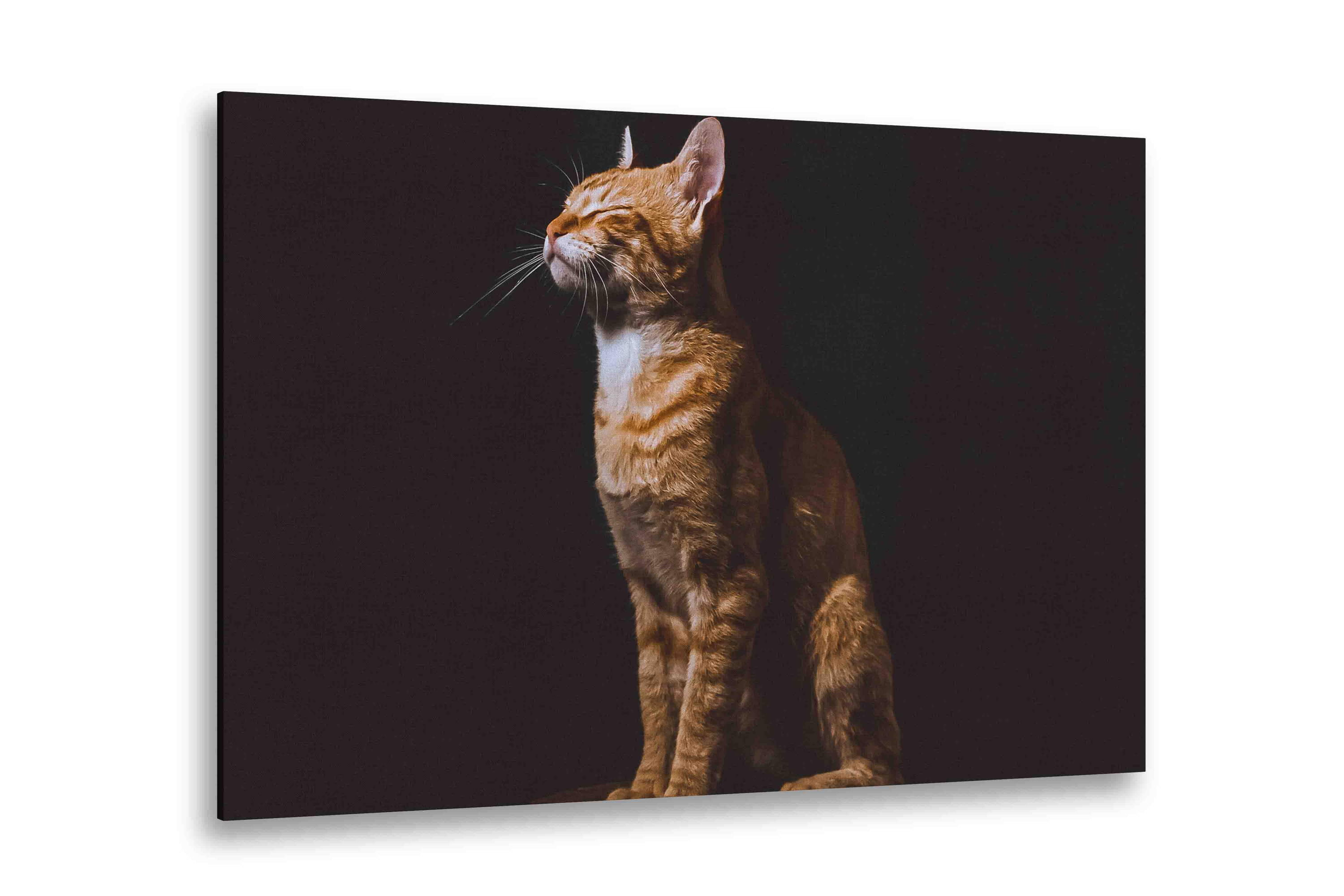 Pet Pictures On Canvas