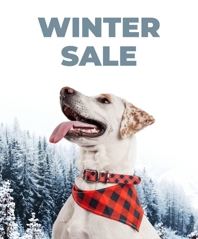 Dog in red banadana and dog collar