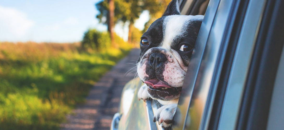 Autofalle - Hitzschlag beim Hund