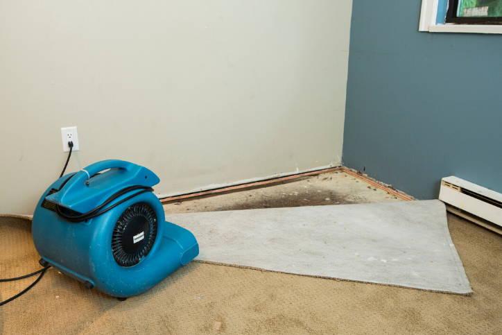 Mold Hiding Under Carpet