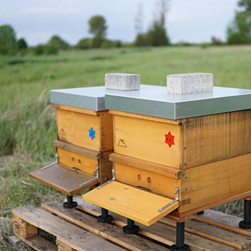 zwei einzargige Bienenvölker in Holzbeute von Bergwinkel
