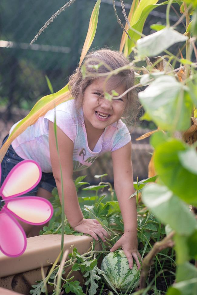 Little girl picking a watermelon.