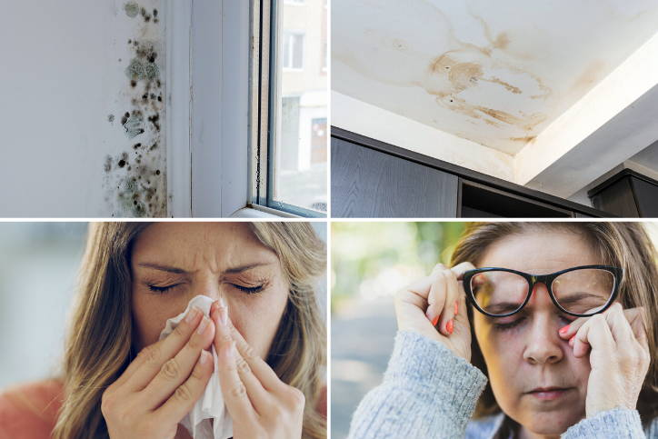 Mold is Dangerous to Your Health