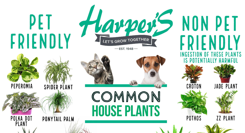 pet friendly plants poster