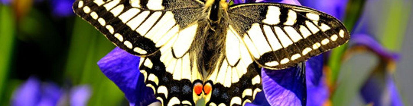 Мир бабочек (Butterfly World)