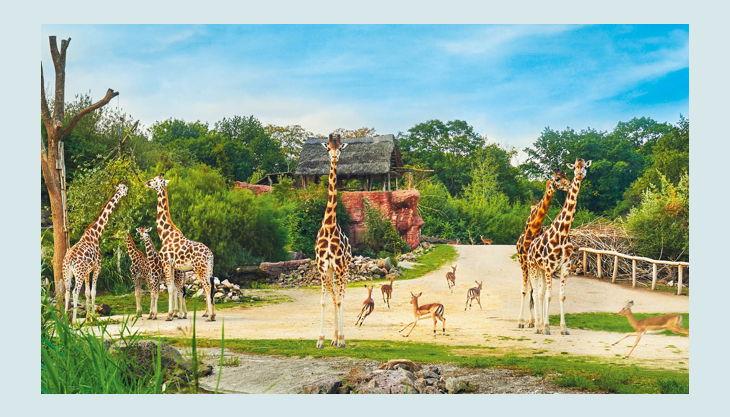 zoom erlebniswelt giraffen gehege