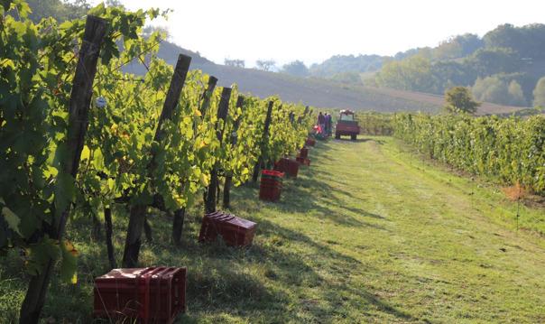 Однодневное путешествие по винодельням и сыродельням Тосканы