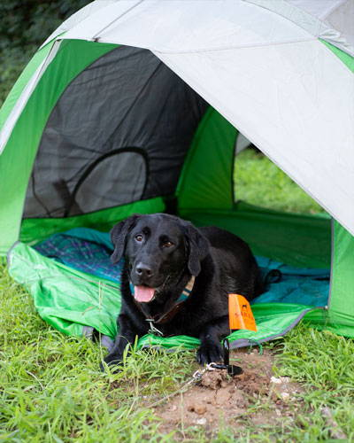 black dog in a tent attached to the gravity dog stake