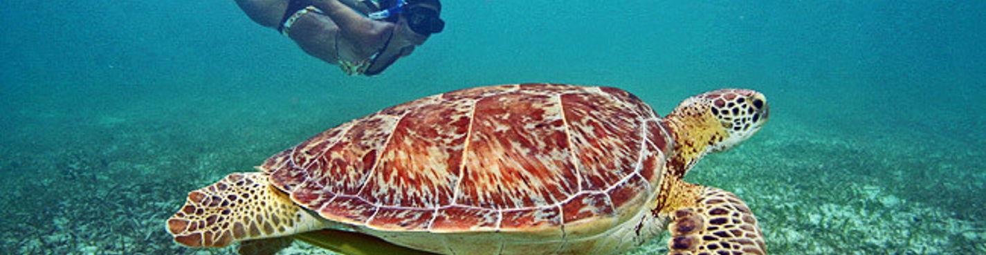 Плавание с черепахами и самые лучшие сеноты