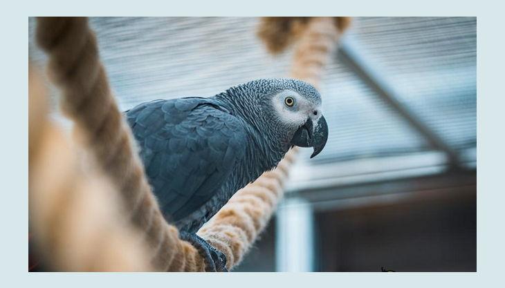 rolfs streichelzoo grau papagei auf seil