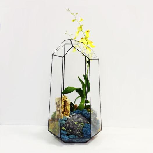 Флорариум Izzy Cartwright с орхидеей Онцидиум Sweet Sugar