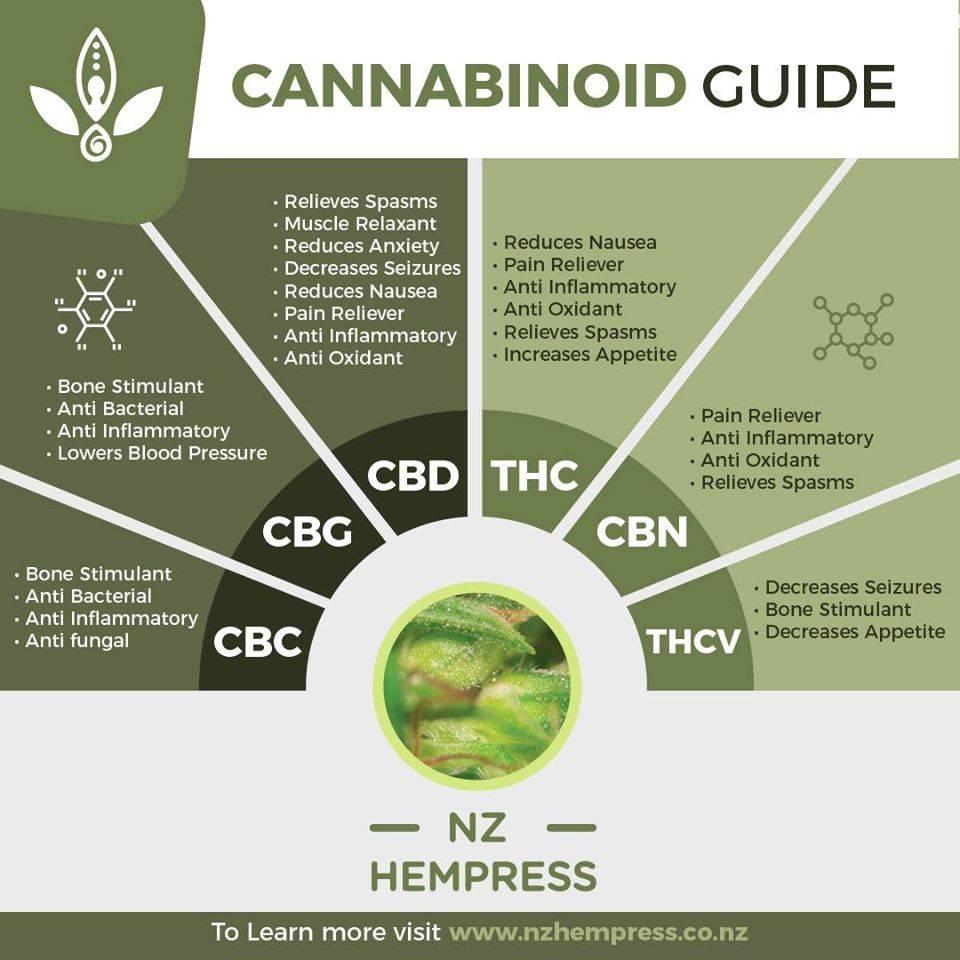 cannabis oil nz