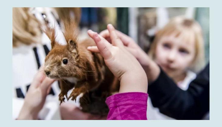 naturkundemuseum fell eines eichhörnchens