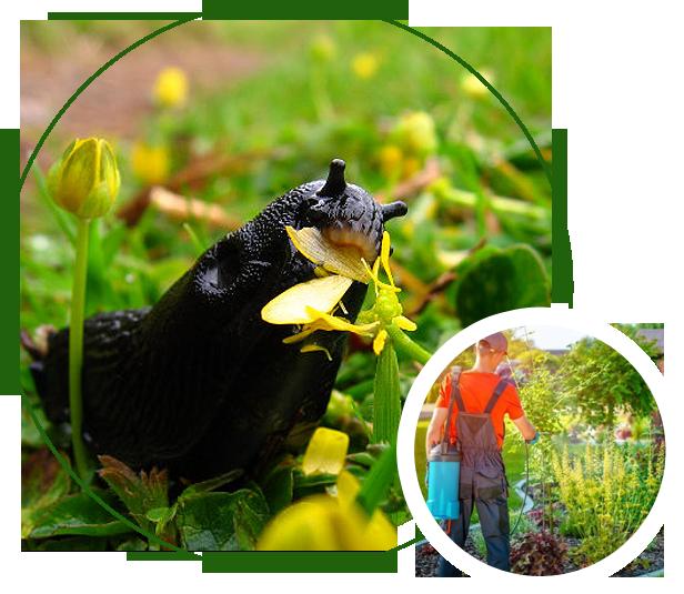 Slug eating plants
