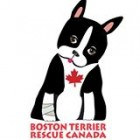 logo for our partner Boston Terrier Rescue Canada