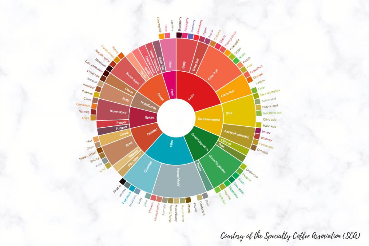 The Coffee Flavor Wheel