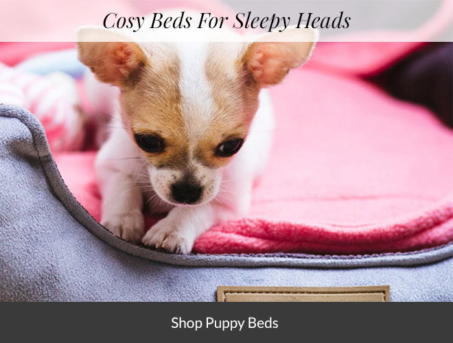 Shop Puppy Beds