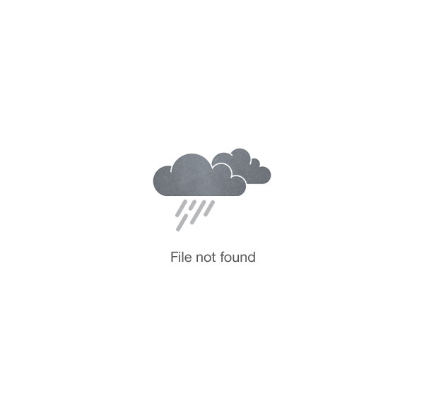 Oooh Baby Blue_flowers_delivery_interflora_nz