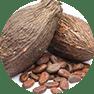 fastblast daily essentials contain organic cocoa