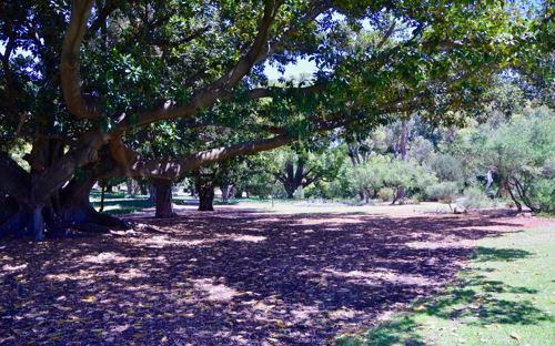 Hyde Park (HP 3) - 0