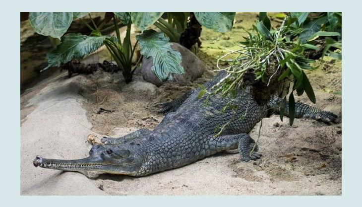 zoologischer garten berlin krokodil
