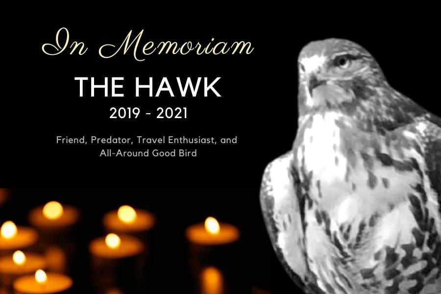 Hawk In Memoriam