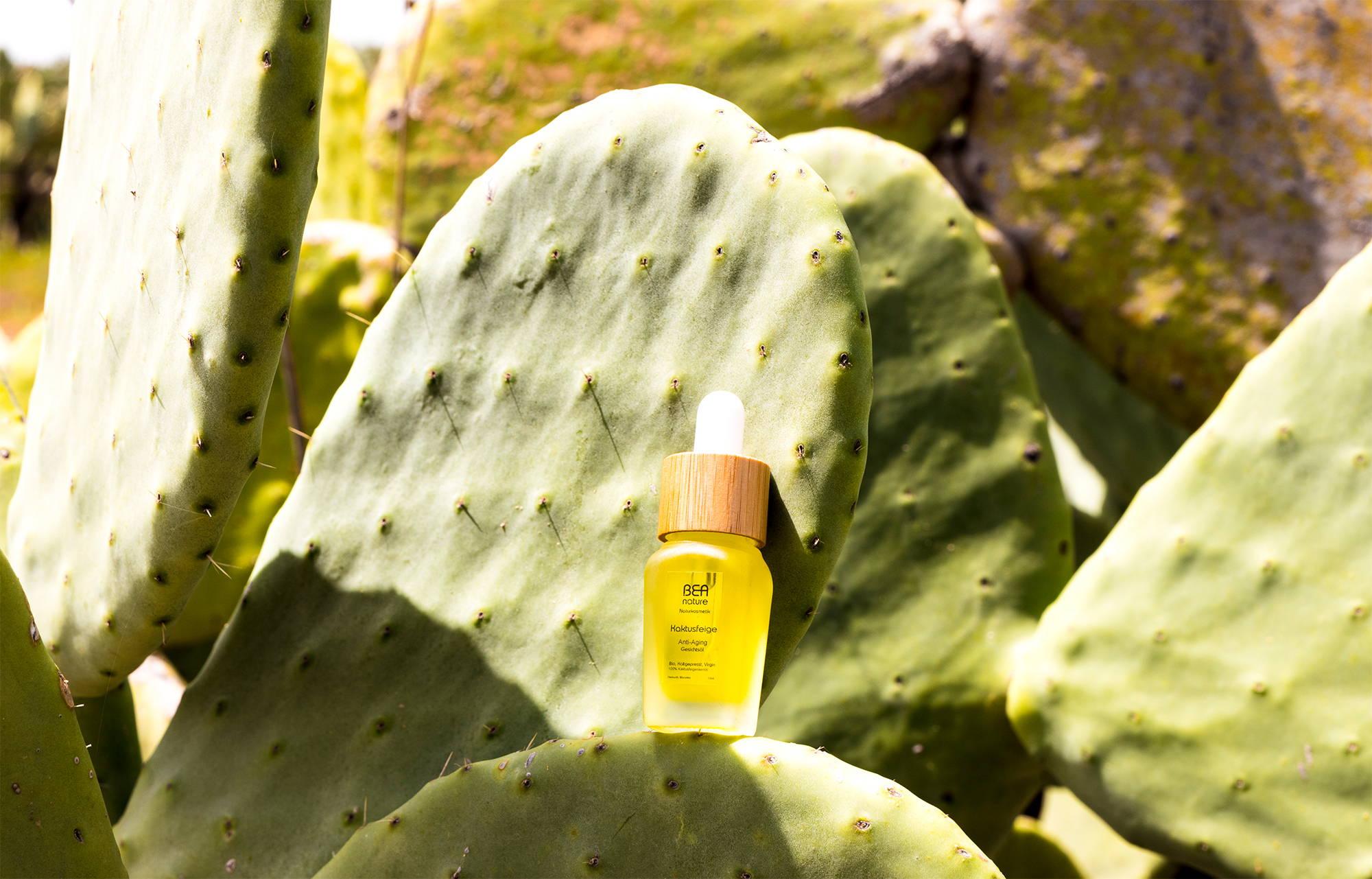 Kaktusfeigenbaum-Plantage-Tunesien